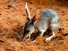 bilby mayor