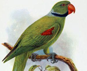 perico-seychelles