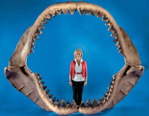 dentadura megalodon