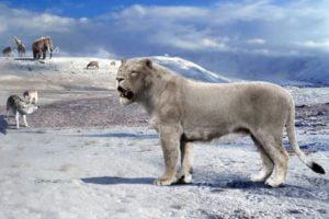 leon-extinto-america