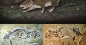 fosil-primer-mamifero