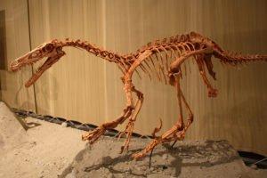 dinosaurio-fosil
