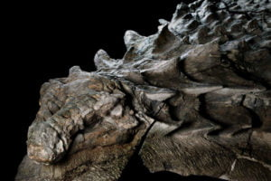 fosil-dinosaurio-mejor-conservado