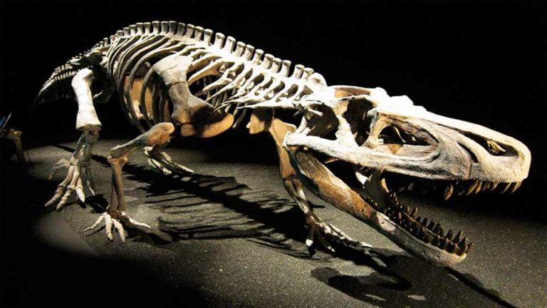 fosiles-dinosaurios
