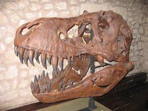 tipos-fosiles