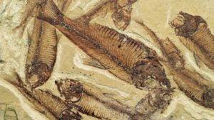 fosiles-peces-prehistoricos