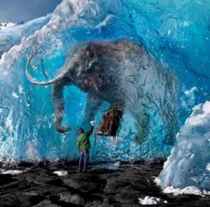 fosil-congelado