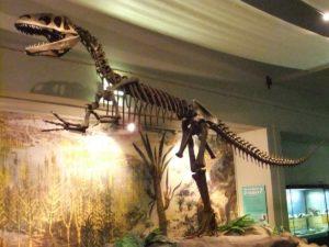 el primero de los fósiles de dinosaurio