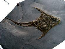 placodermos-fosiles