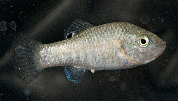 pez-extinto