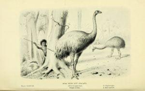animales extintos por culpa del hombre