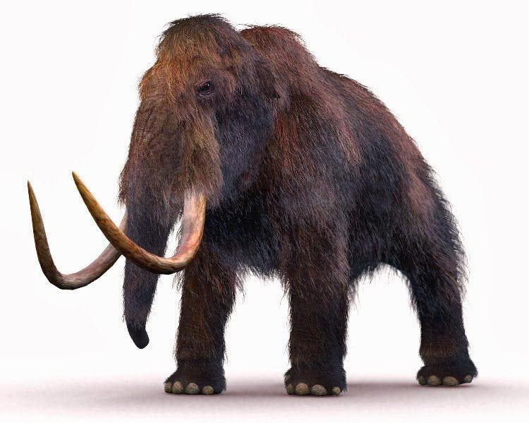 mamut-lanudo-extinto
