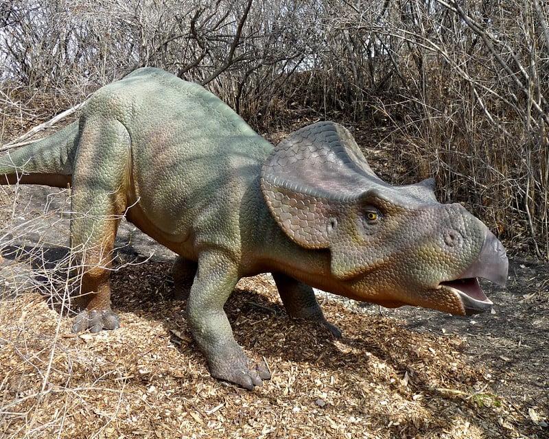 imágenes del protoceratops