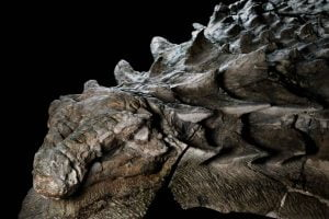 dinosaurio fósil mejor conservado