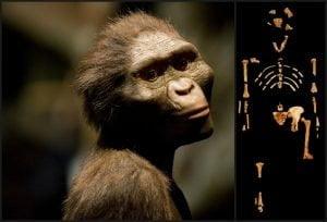 primer fosil primate
