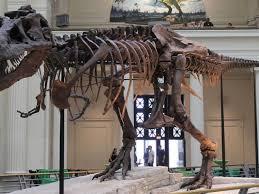 fosil mas antiguo