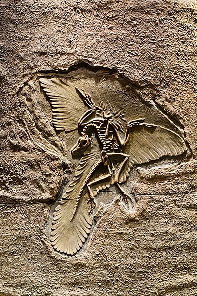 archaeopteryx cómo era