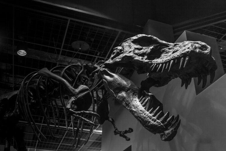 dinosaurios más grandes