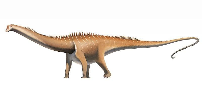 cómo era el diplodocus