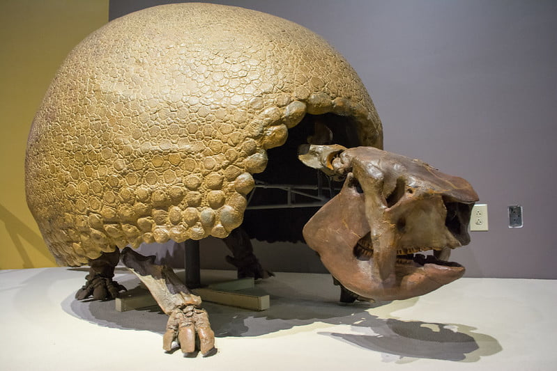 glyptodon extinto