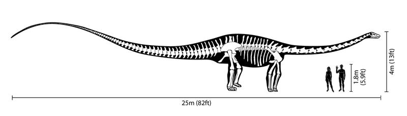 cuánto mide el diplodocus