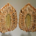 araucaria-mirabilis